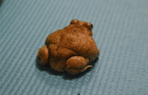 shootmeadub:  toadtime:the cutest, smallest, toad butt   i thought this was whole fried chicken: shootmeadub:  toadtime:the cutest, smallest, toad butt   i thought this was whole fried chicken
