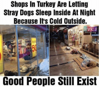 Good people still exist! rvcjinsta: Shops In Turkey Are Letting  Stray Dogs Sleep Inside At Night  Because It's Cold Outside.  Good People Still Exist Good people still exist! rvcjinsta