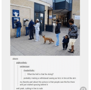 fox: shorm  pigfacedlady  vardaesque  What the hell is that fox doing?  probably making a withdrawal seeing as he's in line at the atm  my favorite part about this picture is that people saw the fox there  and just started queuing behind it  well yeah, cutting in line is rude fox
