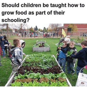 Should Children be taught how to grow food as part of their Schooling?: Should children be taught how to  grow food as part of their  schooling?  GES Should Children be taught how to grow food as part of their Schooling?
