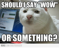 """Every single time when I see meaningless status and tweet http://9gag.com/gag/5555329: SHOULD ISAY WOW""""  OR SOMETHING  quick meme  9GAG  COM/GA /5555329 Every single time when I see meaningless status and tweet http://9gag.com/gag/5555329"""