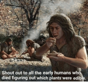 OogaBooga, the real MVP: Shout out to all the early humans who  died figuring out which plants were edible. OogaBooga, the real MVP