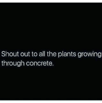 Memes, 🤖, and Concrete: Shout out to all the plants growing  through concrete. Do what you need to in order to grow and progress positively. Do what you need to for your people, remember you are not relevant without your culture. You aren't here alone. Though the spiritually disconnected tell you that you are, remember that you have ancestors guiding you. Connect with people who fulfil your life's purpose, cut off those who don't. Don't feel sorry, when people won't grow with you for the betterment of humanity, don't feel selfish, remind them that if they only care about themselves, if they only action things for themselves, because they are stuck on their egos, then they can stay on their own. There will be barriers but remember this, all buildings that were built deep in the jungle ended up having a tree grow through them... chakabars @majicalru1fam