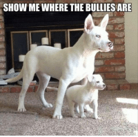 bully: SHOW ME WHERE THE BULLIES ARE