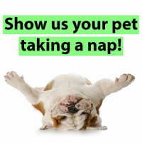 Happy National Napping Day!: Show us your pet  taking a nap! Happy National Napping Day!