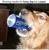 Thank fourleggedfriend carbonated beverage: Showing results for funny dog eat a pepsi Thank fourleggedfriend carbonated beverage