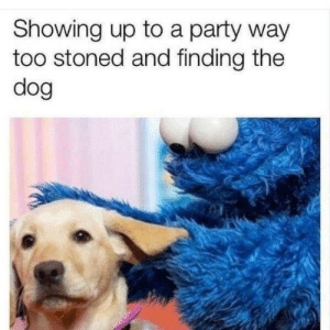 It be like that: Showing up to a party way  too stoned and finding the  dog It be like that