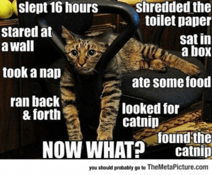 srsfunny:It's So Hard To Be A Cat: shredded the  toilet paper  slept 16 hours  stared at  a wall  sat in  a box  took a nap  ate some food  ran back  & forth  looked for  catnip  NOW WHAT Jound the  catnip  you should probably go to TheMetaPicture.com srsfunny:It's So Hard To Be A Cat