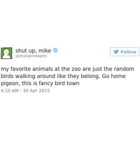 Animals, Shut Up, and Birds: shut up, mike  Follow  @shutupmikeginn  my favorite animals at the zoo are just the random  birds walking around like they belong. Go home  pigeon, this is fancy bird town  4:10 AM 30 Apr 2015 I'm so tired