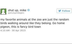 Animals, Dank, and Memes: shut up, mike  Follow  @shutupmikeginn  my favorite animals at the zoo are just the random  birds walking around like they belong. Go home  pigeon, this is fancy bird town  4:10 AM 30 Apr 2015 Meirl by ryguy3305 MORE MEMES