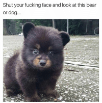 Love it all, especially the 2nd one | 👉 @tatum.strangely for more: Shut your fucking face and look at this bear  or dog Love it all, especially the 2nd one | 👉 @tatum.strangely for more