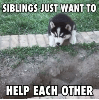 Memes, 🤖, and  Sibling: SIBLINGS JUST WANT TO  HELP EACH OTHER thatswhatsup