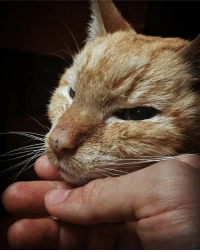 Love, Memes, and Free: Side by side, for 18 years. Catdad cries, YOU SHOULD BE HERE. But your eyes told me..to set you free. I may have rescued you, but you..saved me.😣💙🐈✨.....Love you so much June😔...-Pops (Everyone who has commented-messaged, your words mean everything to me right now.🙏🏼😔)
