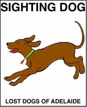 SIGHTING DOG Burnside #Adelaide 2/07/19 3:48pm Slapes Gully Road, Burnside. Small brown dog with a Blue jacket went into the Boral Quarry Area: SIGHTING DOG  LOST DOGS OF ADELAIDE SIGHTING DOG Burnside #Adelaide 2/07/19 3:48pm Slapes Gully Road, Burnside. Small brown dog with a Blue jacket went into the Boral Quarry Area