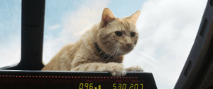 Speed, Lords, and Over: SIGNAL  SPEED  HEADIN8 Praise our over lords the Flerkens