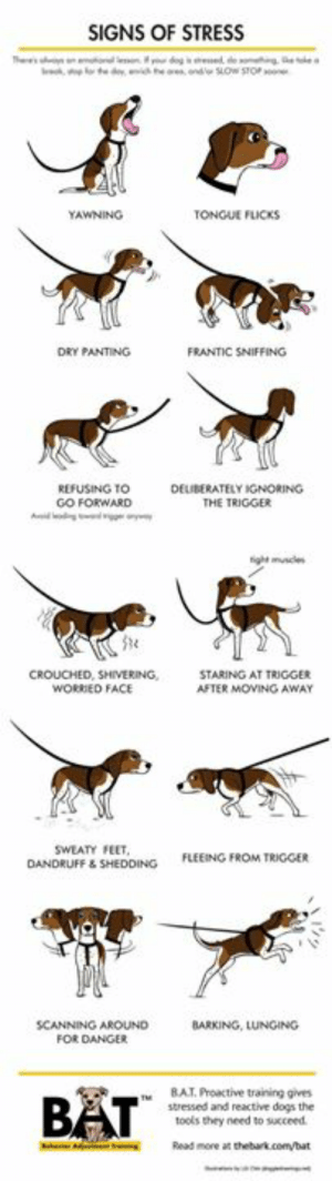 Dogs, Memes, and Watch Out: SIGNS OF STRESS  '  eo y dog i esd de oigee a  othe dyih e ndSLOw STOP  YAWNING  TONGUE FLICKS  DRY PANTING-  FRANTIC SNIFFFING  REFUSING TO  GO FORWARD  edg  DEUBERATELY IGNORING  THE TRIGGER  A  ight musces  CROUCHED, SHIVERING,  WORRIED FACE  STARING AT TRIGGERS  AFTER MOVING AWAY  swEATY FEET,  FLEEING FROM TRIGGER  DANDRUFF &SHEDDING  SCANNING AROUND  BARKING, LUNGING  FOR DANGER  BAT. Proactive training gives-  stressed and reactive dogs the  tools they need to succeed.  Read more at thebark.com/bat We've just gone through one of the most stressful holidays of the year for many dogs. Often neighbors keep lighting off those firecrackers, and other issues during the summer can cause stress in your companion. Be sure to watch out for signs of stress. You can use this handy guide. Then give your dog reassurance and comfort to help them.