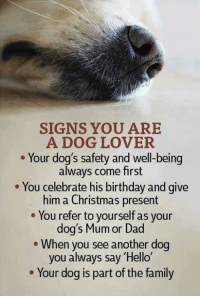 dog lovers: SIGNS YOU ARE  A DOG LOVER  Your dog's safety and well-being  always come first  You celebrate his birthday and give  him a Christmas present  You refer to yourself as your  dog's Mum or Dad  When you see another dog  you always say 'Hello'  Your dog is part of the family