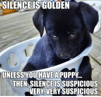 When things get too quiet.: SILENCE IS GOLDEN  UNLESS OU HAVE  THENASILENCE ISSUSPICIOUS.  VERY VERY SUSPICIOUS When things get too quiet.