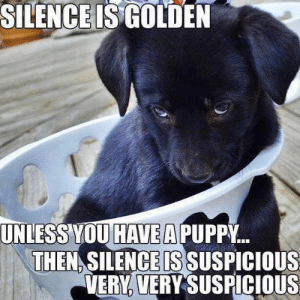 Animals, Memes, and Animal: SILENCE ISGOLDEN  UNLESS YOU HAVE A PUPPY  THEN SILENCE IS SUSPICIOUS  VERY, VERY SUSPICIOUS Animal Memes Of The Day 33 Pics – Ep49 #animalmemes #dogmemes #catmemes - Lovely Animals World