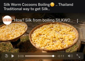 Forbidden Mac n cheese: Silk Worm Cocoons Boiling(  Traditional way to get Silk..  .. Thailand  4STORYER  EXPLORER HOw? Silk from boiling SILKWO..  FACTORY EXP  -0:11 ))  3:09  15 Forbidden Mac n cheese