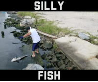 I've got bigger fish to fry: SILLY  FISH I've got bigger fish to fry
