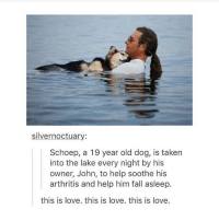 Bad, Fall, and Friends: silvernoctuary:  Schoep, a 19 year old dog, is taken  into the lake every night by his  owner, John, to help soothe his  arthritis and help him fall asleep.  this is love. this is love. this is love. when I was as pride this guy was carrying his dog around so my friends and I asked if we could pet the dog and we did and his owner said the dog was disabled and couldn't walk and that's why he was carrying him and I felt so bad for the pup but then later during the parade the same guy was walking in the parade and was pulling his disabled dog in a wagon and it made me SO HAPPY I WAS CHEERING FOR THAT ADORABLE DOG