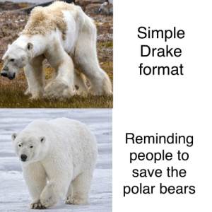 Drake, Bears, and Good: Simple  Drake  format  Reminding  people to  save the  polar bears Good to see people helping