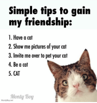 Cats, Instagram, and Memes: Simple tips to gain  my friendship:  1. Have a cat  2. Show me pictures of your cat  3. Invite me over to pet your cat  4. Be a cat  5. CAT  Monty Boy  Monty Boy,net Can YOU relate? 😄 catdad ilovemycat cats_of_instagram catstagram cats_of_world