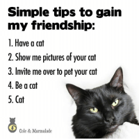 Yup! :): Simple tips to gain  my friendship:  1. Have a cat  2. Show me pictures of your cat  3. Invite me over to pet your cat  4. Be a cat  5. Cat  6  Cole & Marmalade Yup! :)