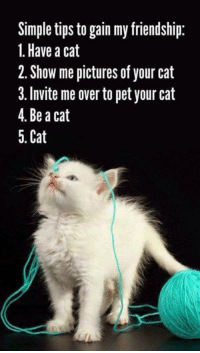 Memes, Pictures, and Friendship: Simple tips to gain my friendship:  1. Have a cat  2. Show me pictures of your cat  3. Invite me over to pet your cat  4. Be a cat  5. Cat