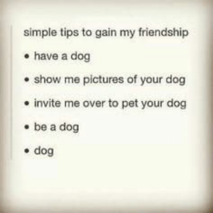 Memes, Pictures, and Friendship: simple tips to gain my friendship  have a dog  show me pictures of your dog  invite me over to pet your dog  be a dog  dog