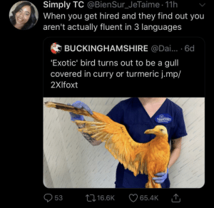 Hired: Simply TC @BienSur_JeTaime 11h  When you get hired and they find out you  aren't actually fluent in 3 languages  BUCKINGHAMSHIRE @Dai... . 6d  'Exotic' bird turns out to be a gull  covered in curry or turmeric j.mp/  2Xlfoxt  Tiggyowindes  Wldlife Nu  53  L16.6K  65.4K