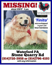 Still Missing: REWARD NOW OFFERED FOR SAFE RETURN Networker Grace called to update her lost dog ad with a reward for Finito's safe return. Grace has been desperately searching everywhere for him since he became lost earlier this week. If you have any information, please contact his worried family, or contact us here at EAN. Networkers, please continue to be on the lookout for him. Thank you!: since 1/9/17 5 pm  Erie Animal Network  'Finito'  microchipped  9 years old  blue bandana  Waterford PA  Stone Quarry Rd  (814)720-5958 or (814)796-4193  with any information Still Missing: REWARD NOW OFFERED FOR SAFE RETURN Networker Grace called to update her lost dog ad with a reward for Finito's safe return. Grace has been desperately searching everywhere for him since he became lost earlier this week. If you have any information, please contact his worried family, or contact us here at EAN. Networkers, please continue to be on the lookout for him. Thank you!