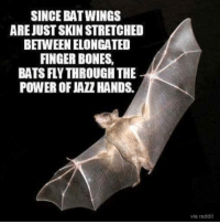 bat: SINCE BAT WINGS  ARE JUSTSKIN STRETCHED  BETWEEN ELONGATED  FINGER BONES,  BATS FLYTHROUGH THE  POWER OF HANDS.  via reddit