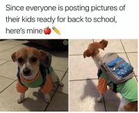 Funny, School, and Animal: Since everyone is posting pictures of  their kids ready for back to school,  here's mine 22 Cool Animal Pictures From This Week That Are Actually Funny