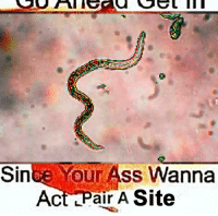 Ass, Act, and Site: Since *our Ass Wanna  Act Pair A Site