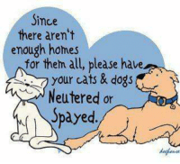 neuter: Since  there aren't  enough homes  for them all, please have  your cats & dogs  Neutered or  Spayed