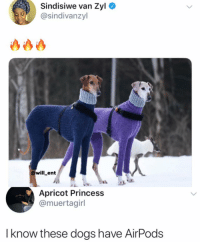 Dogs, Life, and Memes: Sindisiwe van Zyl  sindivanzyl  @will_ent  Apricot Princess  @muertagirl  I know these dogs have AirPods They are living their best life