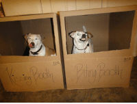 Dogs, One, and Which One: sing  104 which one do u choose?