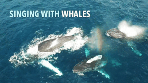 Memes, Singing, and Amazing: SINGING WITH WHALES What an Amazing Moment! Have you ever experienced anything like this?