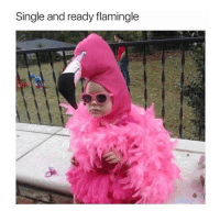 tag your crush (; Do not , I repeat do not follow @memezerino if you get easily offended 🤬🤯: Single and ready flamingle tag your crush (; Do not , I repeat do not follow @memezerino if you get easily offended 🤬🤯