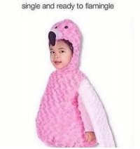 Single,  Ready, and And: single and ready to flamingle