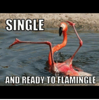 Newly single girls ☝️: SINGLE  AND READY TO FLAMINGLE Newly single girls ☝️