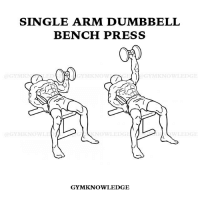 SINGLE ARM DUMBBELL  BENCH PRESS  GYMKNOWLEDGE Single Arm Dumbbell Bench Press Main Muscle Worked: Chest Other Muscles: Shoulders, Triceps Equipment: Dumbbell 1⃣Lie down on a flat bench with a dumbbell in one hand on top of your thigh. 2⃣By using your thigh to help you get the dumbbell up, clean the dumbbell up so that you can hold it in front of you at shoulder width. Use the hand you are not lifting with to help position the dumbbell over you properly. 3⃣Once at shoulder width, rotate your wrist forward so that the palm of your hand is facing away from you. This will be your starting position. 4⃣Bring down the weights slowly to your side as you breathe in. Keep full control of the dumbbell at all times. 🔹Tip: Use the hand that you are not lifting with to help keep the dumbbell balance as you may struggle a bit at first. Only use your non-lifting hand if it is needed. Otherwise, keep it resting to the side. 5⃣As you breathe out, push the dumbbells up using your pectoral muscles. Lock your arms in the contracted position, squeeze your chest, hold for a second and then start coming down slowly. 🔹Tip: It should take at least twice as long to go down than to come up. 6⃣Repeat the movement for the prescribed amount of repetitions of your training program. 7⃣Switch arms and repeat the movement. . ‼️Caution: When you are done, do not drop the dumbbell next to you as this is dangerous to your rotator cuff in your shoulders and others working out around you. Just lift your legs from the floor bending at the knees, twist your wrist so that you can place the dumbbell on top of your thigh. When the dumbbell is touching your thigh simultaneously push your upper torso up (while pressing the dumbbell on your thigh) and also perform a slight kick forward with your legs (keeping the dumbbell on top of the thigh). By doing this combined movement, momentum will help you get back to a sitting position with the dumbbell still on top of your thigh. At this moment you can place the dumbb