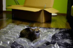 Fucking, Tumblr, and Blog: singlekinkymaster: daksinakke:  funfrom4chan:  So my cat likes unpacking..  thats the happiest fucking cat ive ever seen  i have th same reaction to bubble wrap