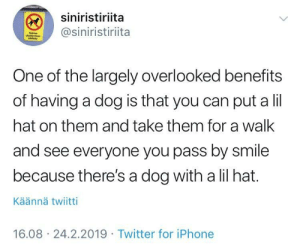 Iphone, Tumblr, and Twitter: siniristiriita  @siniristiriita  One of the largely overlooked benefits  of having a dog is that you can put a lil  hat on them and take them for a walk  and see everyone you pass by smile  because there's a dog with a lil hat.  Käännä twiitti  16.08 24.2.2019 Twitter for iPhone awesomacious:  Why isn't this happening around me?