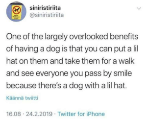 Cute, Iphone, and Twitter: siniristiriita  @siniristiriita  One of the largely overlooked benefits  of having a dog is that you can put a lil  hat on them and take them for a wallk  and see everyone you pass by smile  because there's a dog with a lil hat.  Käännä twiitti  16.08 24.2.2019 Twitter for iPhone Cute boi wearing a cute lil hat