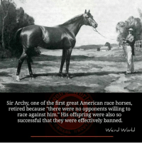 "Horses, Memes, and Horse: Sir Archy, one of the first great American race horses,  retired because ""there were no opponents willing to  race against him."" His offspring were also so  successful that they were effectively banned.  Weird World"