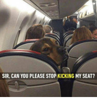 Sir, can we just be good boys? Follow @9gag for more great memes. 9gag dog plane kicking: SIR, CAN YOU PLEASE STOP KICKING MY SEAT? Sir, can we just be good boys? Follow @9gag for more great memes. 9gag dog plane kicking