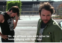 Cats, Funny, and Home: Sir, e alt have cats weld rather be  home playing with right now. Be sure to like my other page Paddy's Pub for more awesome Always Sunny content.